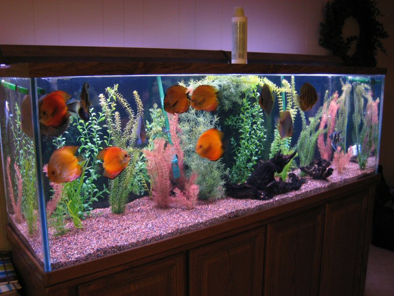 Tips to decorate fish aquarium home decor report for Aquarium house decoration