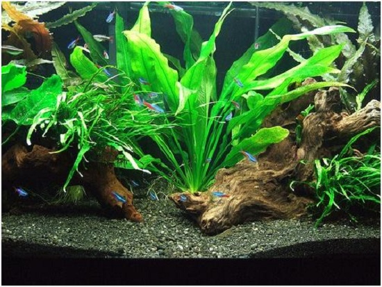 Aquarium gravel design images for Aquarium stone decoration