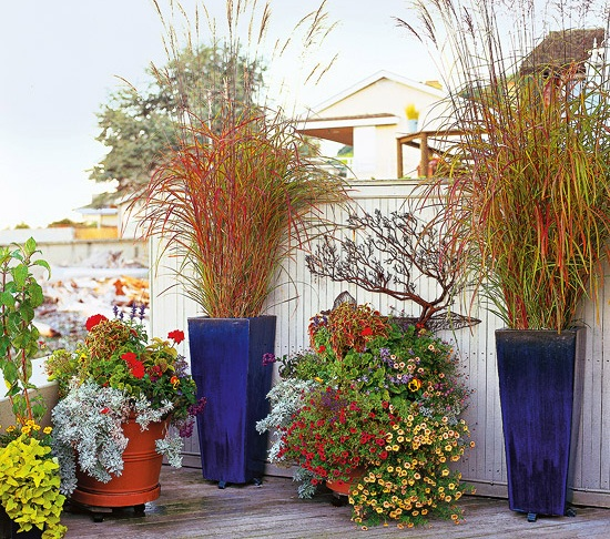 Gardening Ornamental Grass