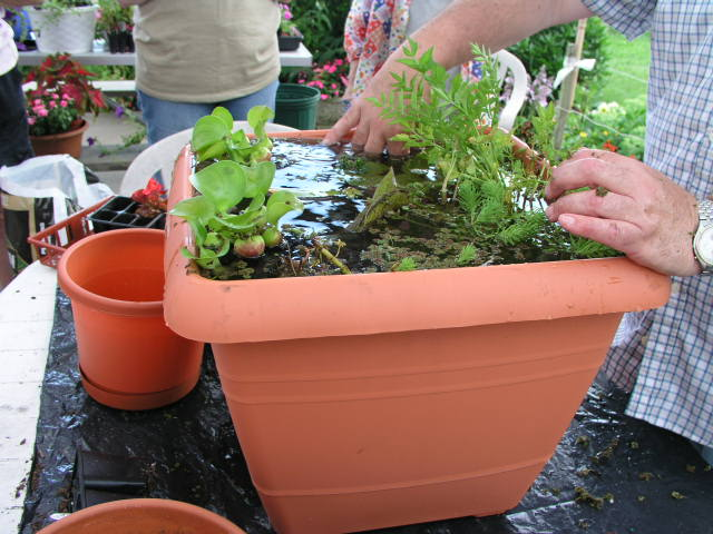 Tips to plant on water garden containers home decor report for Planting pond plants in containers