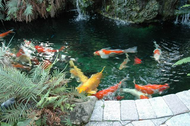 Koi Fish Ponds Designs Home Decor Report
