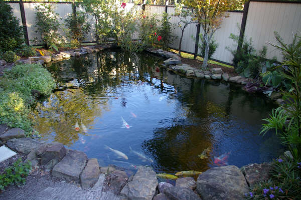 Koi Fish Ponds Pictures Home Decor Report