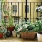 Vegetable Terrace Garden